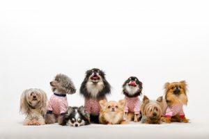 いろんなサイズ、いろんな犬種の集合写真