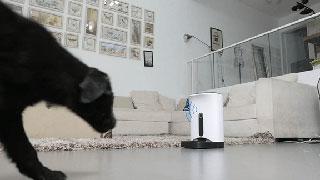 声の呼びかけに食事と気づいてマシンに歩み寄る犬の様子