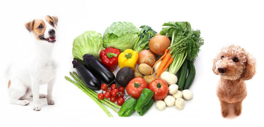 たくさんの野菜の種類と見つめる犬