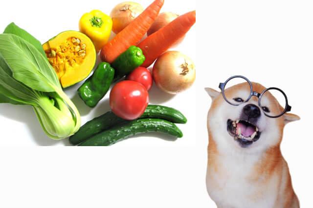 野菜について学ぶ熱心な犬