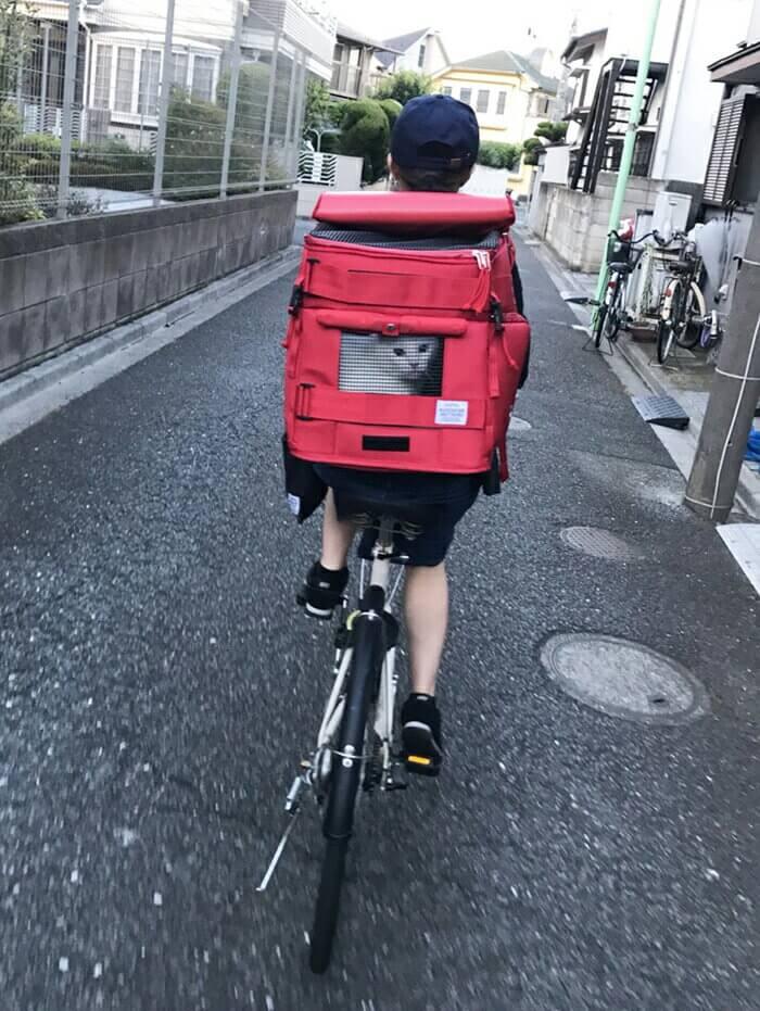 ・自転車の荷台にリュックキャリーを乗せて公道を走る女性の後ろ姿