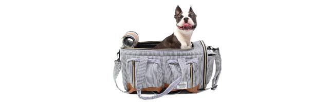 ビックポケットキャリーバッグに収まったフレンチブルドッグの写真
