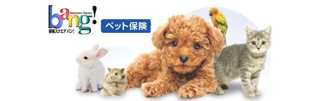 ペット保険の資料一括請求サービスBang!のロゴ画像とイメージ犬
