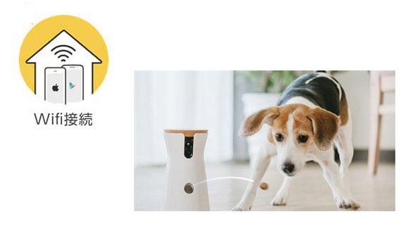 Wifi環境のマークと犬の室内で遊ぶ風景