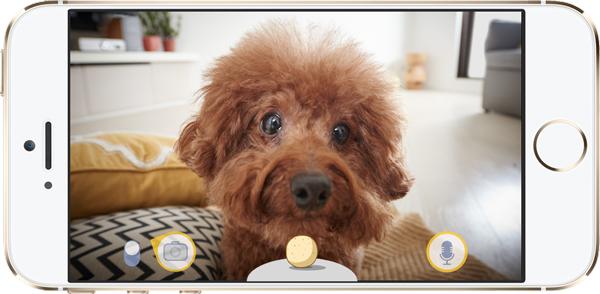 スマホに映し出された室内と愛犬の動画